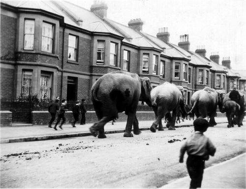 Why did Elephants visit Exmouth 100 years ago?