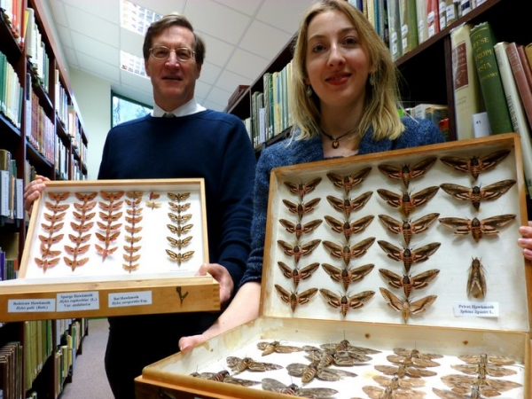 Insect collection donated to RAMM