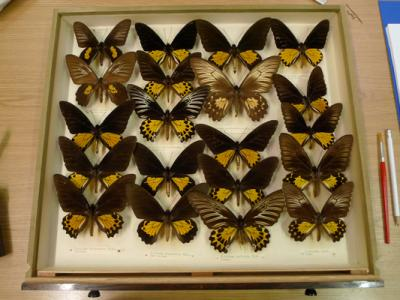 Small Grant Big Improvement Funds Butterfly Conservation Project